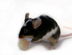 Mäusenamen weiblich - witzige Ideen