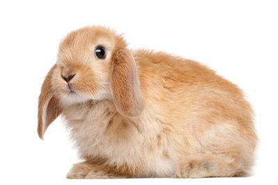 Haarausfall beim Kaninchen sollte immer untersucht werden.