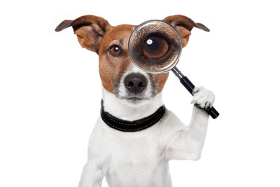 Winzig kleine Parasiten im Hundefell finden
