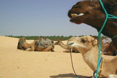 Zum Jahreswechsel zum Kamelreiten in die Wüste