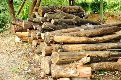 Holzstämme kaufen - Hinweise für den Holzerwerb.