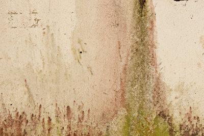 Grüner Schimmel in der Wohnung ist eine gesundheitliche Gefahrenquelle.