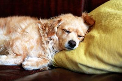 Wärme hilft gegen Bauchschmerzen - auch bei Hunden.