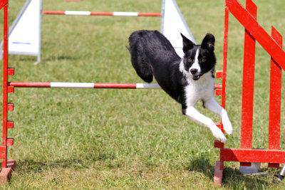 Hunde haben großen Spaß am Hundesport.