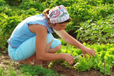 Gemüse anzubauen, erfordert ein wenig Arbeit, bringt Ihnen aber die Frische auf den Teller.