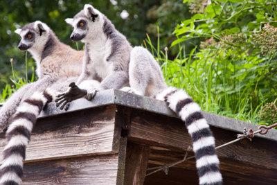 Madagaskar bietet eine reiche Flora und Fauna.