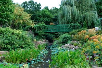Ein Wassergarten ist ein idealer Standort für Brunnenkresse.