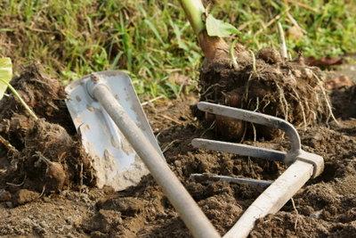 Einige Menschen nutzen ihr Grundstück als Gemüsegarten.