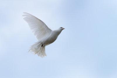 Mit einem Tauben-Kostüm bewegen Sie sich (fast) wie eine Taube.