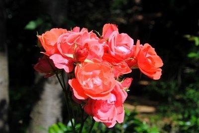 Rosen sind ein Zeichen der Liebe.