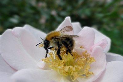 Honig macht nicht zwingend fett.