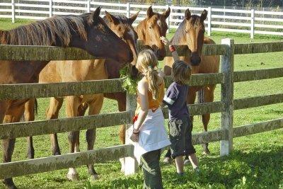 Kleine Mädchen und Pferde passen fast immer zusammen.