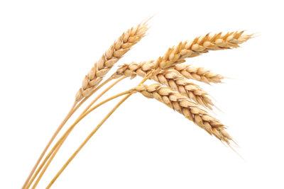 Weizen kann zu Darmbeschwerden führen.