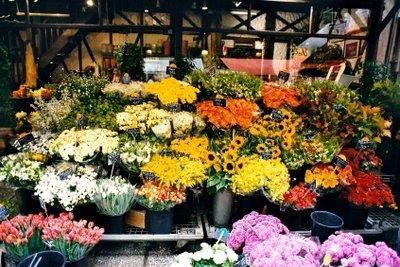 Wunderschöne Blumen in allen Farben
