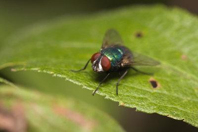 Fliegen gehören nach draußen - nicht in die Wohnung.
