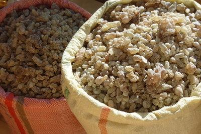 Weihrauch - Klimaverhältnisse bestimmen die Ernte