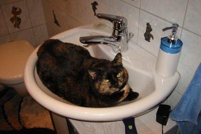Auch Haustiere dürfen nach dem Streichen nicht ans Waschbecken.