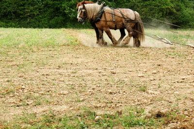 Das Pferdegespann als Basis für Flächeneinheiten