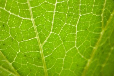 Vakuolen sind an der Farbgebung von Pflanzen beteiligt.
