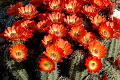 Zimmerpflanzen, die sich fürs Südfenster eignen sind beispielsweise Kakteen.