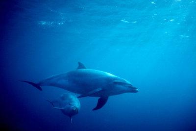 Delfine fressen kleine Meerestiere.