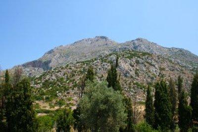 Griechisches Eisenkraut wächst an kargen Berghängen.