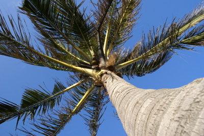 Wie eine Palme erstrecken sich die Inselgruppen.
