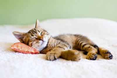 Die kranke Katze braucht viel Ruhe.
