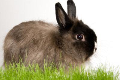 Kaninchenschnupfen ist hochansteckend.