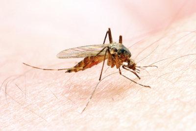 So schützen Sie sich vor juckenden Mückenstichen.