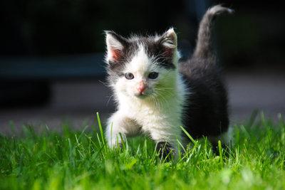 Das Jagdverhalten ist Katzen angeboren.