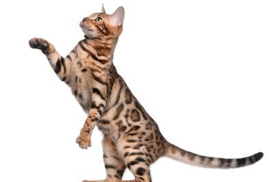 Katzen brauchen etwas für ihre Krallen.