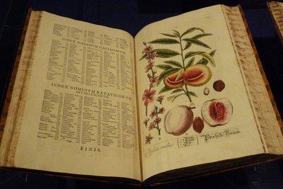 Auch die Botanik gehört zur Biologie.