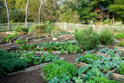 Die besten Voraussetzungen hat Rosmarin im Garten.