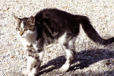 Katzen setzen durch ihr Buckeln Grenzen.