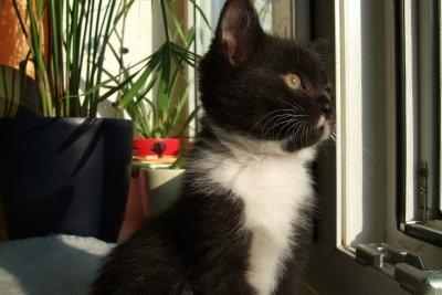 Die Katze guckt interessiert nach draußen.