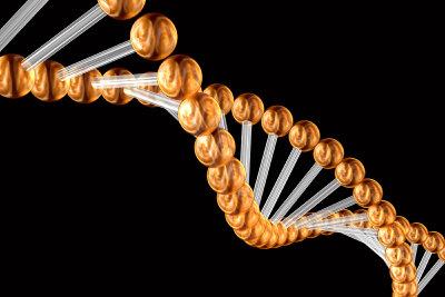 Der Zellkern enthält die DNA.