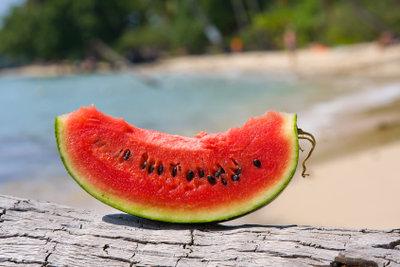 Wassermelonen schmecken dem Meerschweinchen.