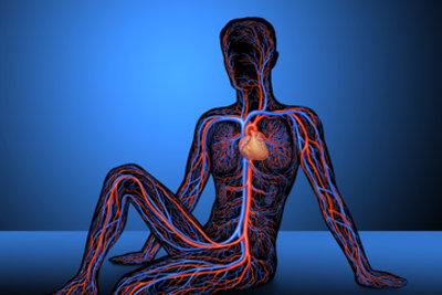 Venen sorgen für die Verteilung des sauerstoffreichen Blutes im Körper (blau im Bild = Venen)