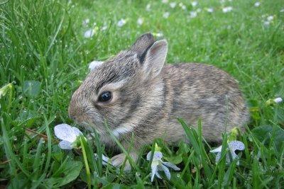 Ihr Kaninchen ist gestorben: Trotz EU-Richtlinien liebevoll bestatten.