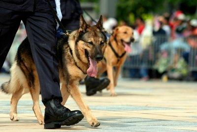 Polizeibeamte werden nach Besoldungsgruppen bezahlt.