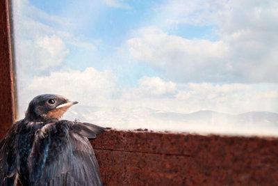 Vögel nehmen Fenster nicht als Grenze wahr.