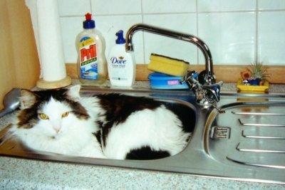 Eine Küchenarmatur muss für so manches taugen und will gut ausgesucht sein.