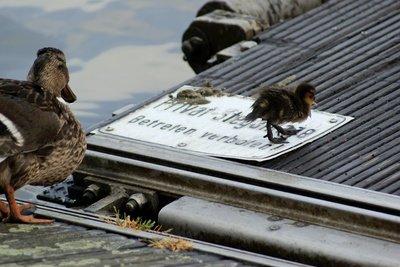 Gestalten Sie eine nette Behausung für Ihre Enten.