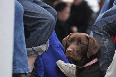 Auch Hunde können seekrank werden.