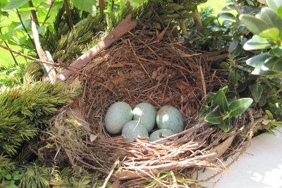 Bruteier sind zur Zucht geeignetet - befruchtete Eier.