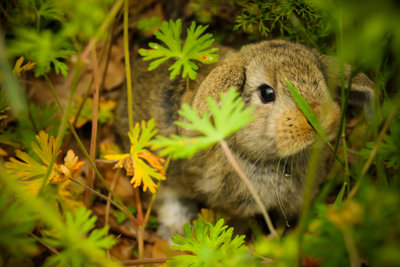 Auch Kaninchen können Flöhe bekommen.