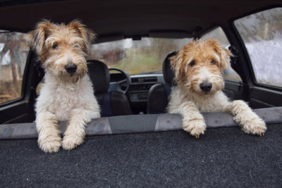 Mit einer Hundebox ist der Tiertransport sicherer.
