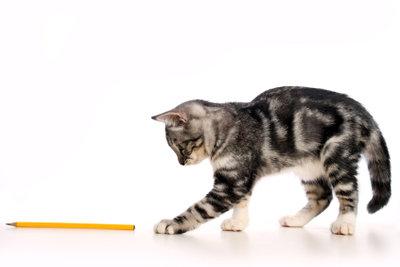 Was zum Wohlbefinden Ihrer Katze beiträgt