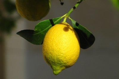 Zitronenwasser und Fettverbrennung.